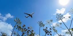 KLM Fry flight